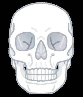 頭蓋(側面)